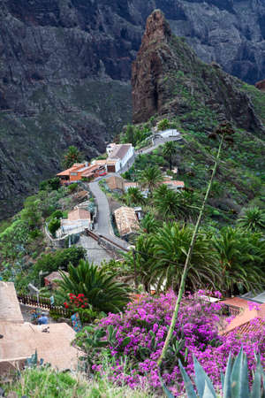 MASCA, TENERIFE, CANARY, SPAIN - CIRCA JAN, 2016: Beautiful and colorful palm trees and plant are in Masca. Masca village is a famous tourist place with start of hiking trail through the gorge