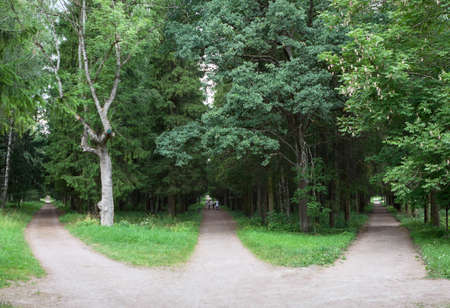 Three forest roads converge into one or diverge point of three ways. Gatchina town, Russia
