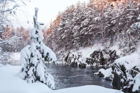 Winter landscape with snowbound evergreen fir growing on rocky riverbed. Open water at winter season, Karelia republic