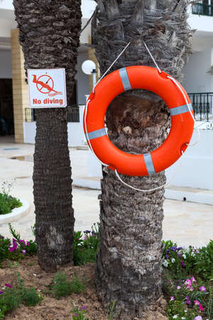 Red lifebuoy hanging on palm tree with caution plate No diving. An hotel swimming pool area Standard-Bild - 119429120