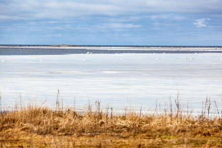Winter seascape, the Baltic sea is on the Saaremaa island, birds sitting on ice. Estonia, Europe