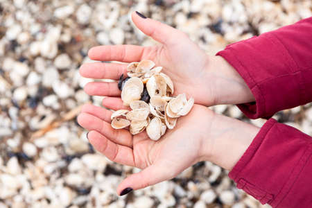Female cupped hands are full of seashells, close-up view