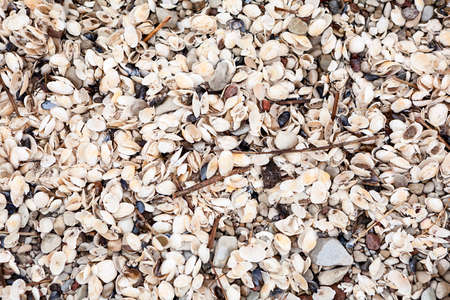 Sea shells background, surface with lot of opened seashells