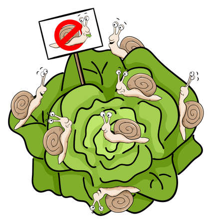 crawling creature: vector illustration of snails eating lettuce Illustration