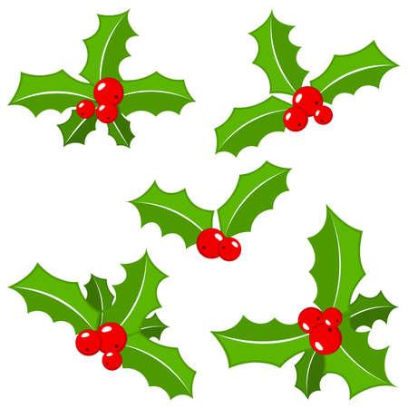 houx: illustration vectorielle d'un ensemble de feuilles de houx de no�l isol� sur blanc