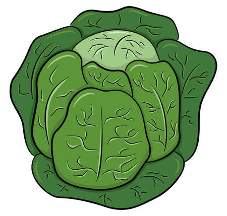 vector illustration of drawn cartoon white cabbage Ilustrace