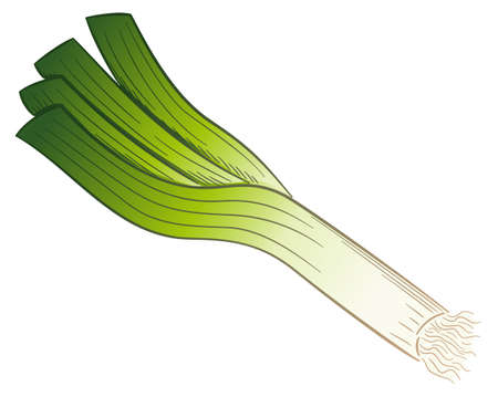 vector illustration of a drawn cartoon leek stick Vectores