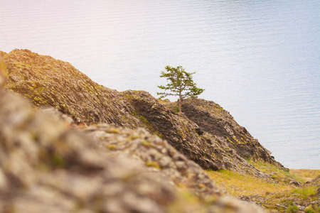 Green tree growing on rocks by the water. Rocks on the shore of lake Baikal. The Baikal shore in the sun.