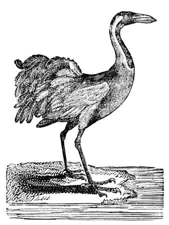 Victorian engraving of a crane. Digitally restored image from a mid-19th century Encyclopaedia. Stok Fotoğraf - 42489986