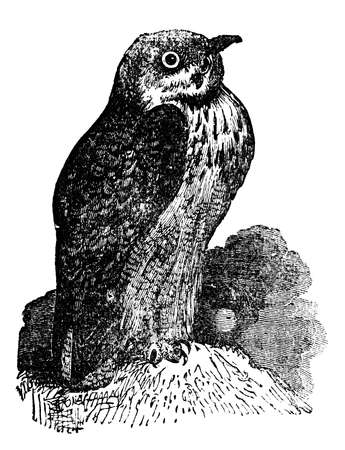 restored: Victorian engraving of an eagle-owl. Digitally restored image from a mid-19th century Encyclopaedia.