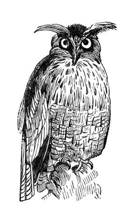 19th century engraving of a great eagle owl Фото со стока