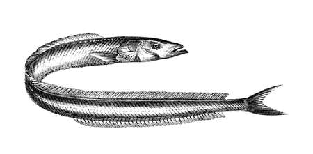 Victorian engraving of a sand lance. Digitally restored image from a mid-19th century Encyclopaedia. Imagens