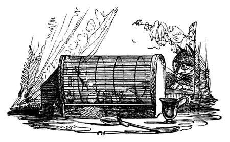 cavie: Incisione del 19 ° secolo di un gatto a guardare cavie