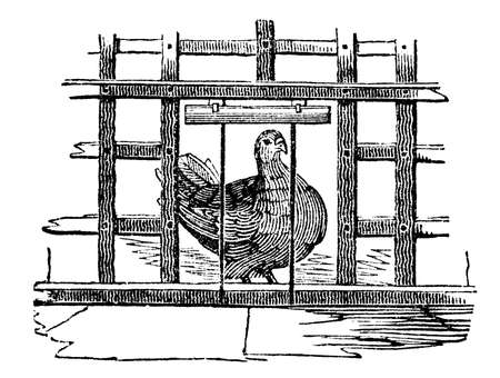 19th century engraving of a pigeon in a cage