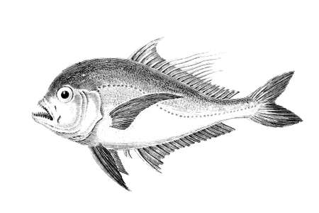 참람 물고기의 19 세기 조각 스톡 콘텐츠