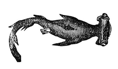 pez martillo: Grabado victoriana de un tiburón martillo. Imagen digitalmente restaurada de una enciclopedia mediados del siglo 19.