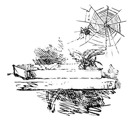 moth: 19th century engraving of a moth and spider