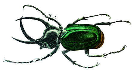 19th century engraving of a colourful giant beetle Stock fotó