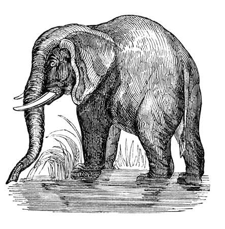 19th century engraving of an African elephant Stock Photo
