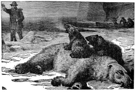 Victorian engraving of a polar bear killed in a hunt