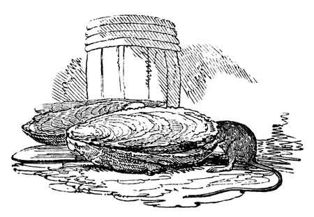 クロール タイトルの本から撮影した、貝殻でマウスの 19 世紀の彫刻 写真素材