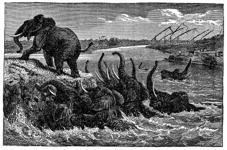 herd: Victorian engraving of a herd of elephants fording a river