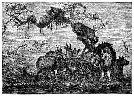 animals together: Victorian engraving of animals huddled together in a flood