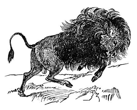 digitally: Victorian engraving of a bison. Digitally restored image from a mid-19th century Encyclopaedia.