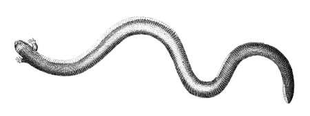 뱀의 19 세기 조각 스톡 콘텐츠