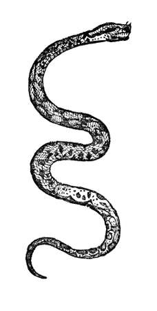 Victorian engraving of a boa constrictor. Digitally restored image from a mid-19th century Encyclopaedia. Stock Photo