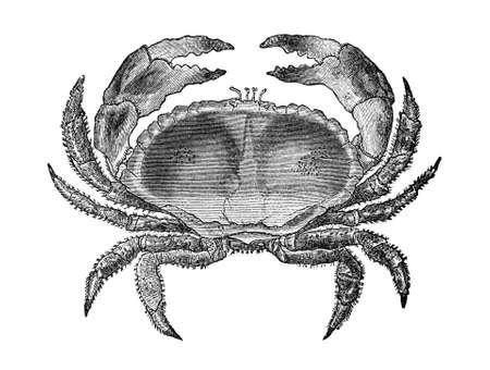 19th century engraving of a crab 版權商用圖片