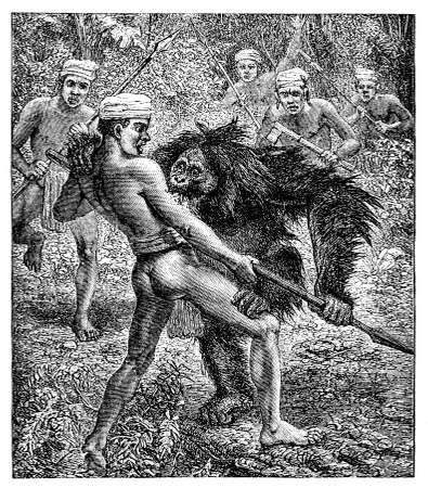 indigenous: Victorian engraving of an orangutan fighting an indigenous hunter Stock Photo