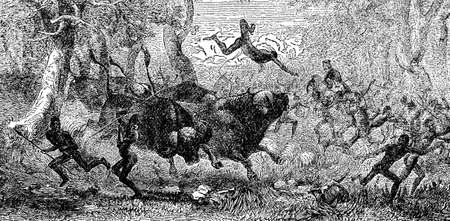 indigenous: Victorian engraving of a buffalo hunt by indigenous Africans Stock Photo