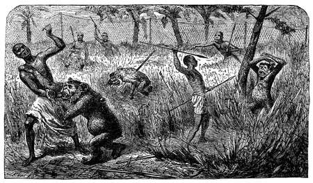 Victorian engraving of a chimanzee hunt