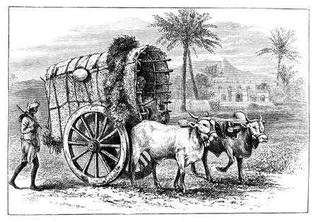 anthropology: Victorian engraving of a farmer
