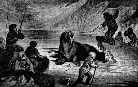 esquimales: Grabado victoriana de una caza de morsas Foto de archivo