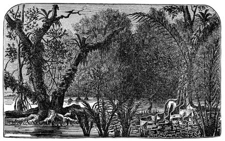 amazon rainforest: Victorian engraving of the Amazonian rain forest