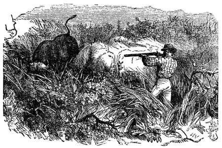 Victorian engraving of a safari hunter shooting a buffalo Stok Fotoğraf