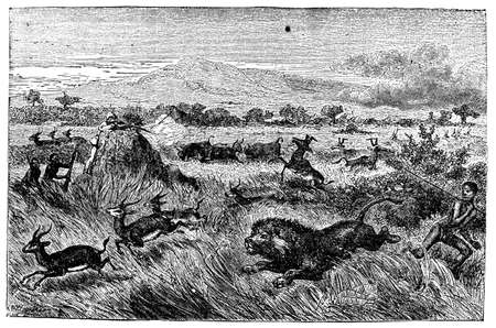 other keywords: Victorian engraving of an African safari hunt