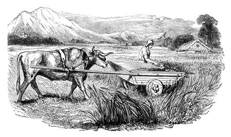 Victorian engraving of a  traditional farm scene. Digitally restored image from a mid-19th century Encyclopaedia. Stock Photo