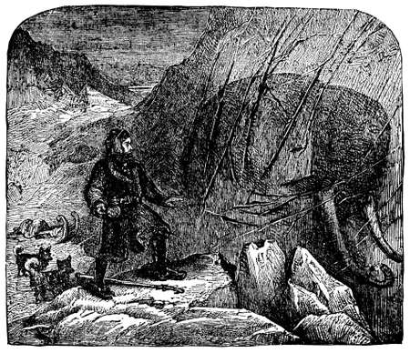 discovery: Victorian engraving of a discovery of a frozen mammoth