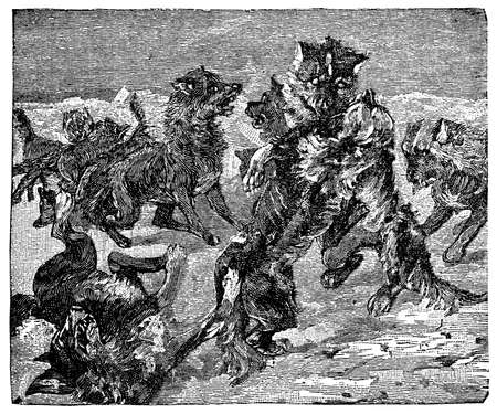 Victorian engraving of Arctic sled dogs wrestling
