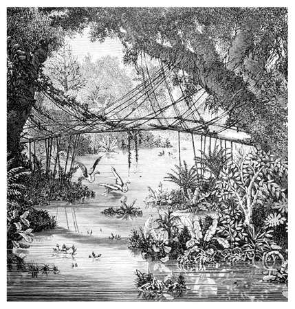Victorian engraving of a  jungle scene, Darjeeling, India. Digitally restored image from a mid-19th century Encyclopaedia.