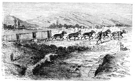 19e-eeuwse gravure van een agrarisch scène, gefotografeerd vanuit een boek met de titel 'Italian Pictures getekend met pen en potlood' gepubliceerd in Londen ca. 1870. auteursrecht heeft op dit kunstwerk is verstreken. Digitaal hersteld. Stockfoto
