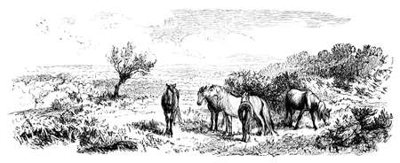 19th century engraving of a scene in the New Forest National Park, UK