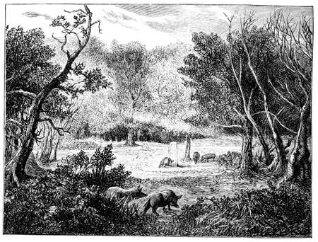 19th century engraving of the New Forest, UK
