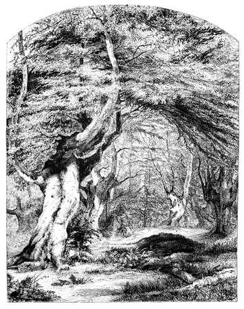19th century engraving of a forest scene, UK 版權商用圖片