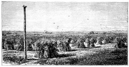 bales: 19th century engraving of a Fenland scene, UK
