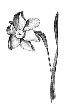꽃의 19 세기 조각