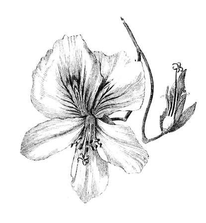 gefotografeerd uit een boek met de titel de 'National Encyclopedia', gepubliceerd in Londen in 1881. Het auteursrecht is verlopen op dit kunstwerk. Digitaal hersteld.